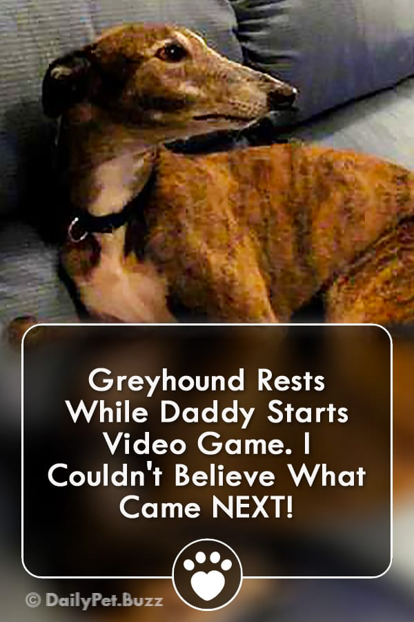 Greyhound Rests While Daddy Starts Video Game. I Couldn\'t Believe What Came NEXT!