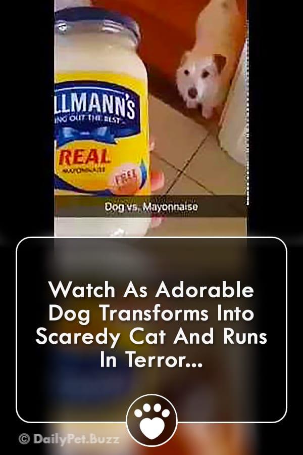 Watch As Adorable Dog Transforms Into Scaredy Cat And Runs In Terror...