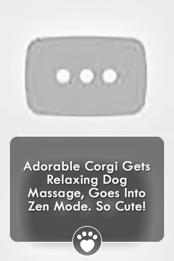 Adorable Corgi Gets Relaxing Dog Massage, Goes Into Zen Mode. So Cute!