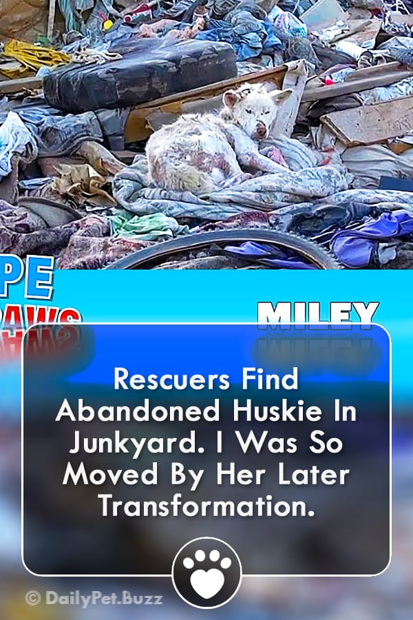 Rescuers Find Abandoned Huskie In Junkyard. I Was So Moved By Her Later Transformation.