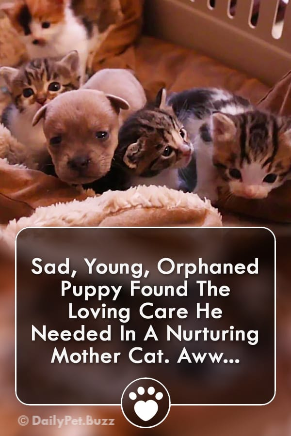 Sad, Young, Orphaned Puppy Found The Loving Care He Needed In A Nurturing Mother Cat. Aww...