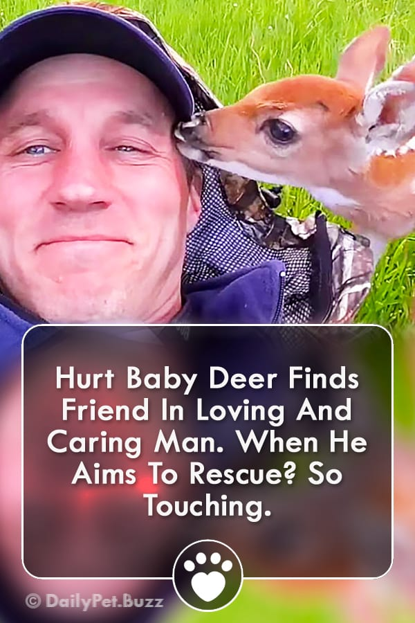 Hurt Baby Deer Finds Friend In Loving And Caring Man. When He Aims To Rescue? So Touching.