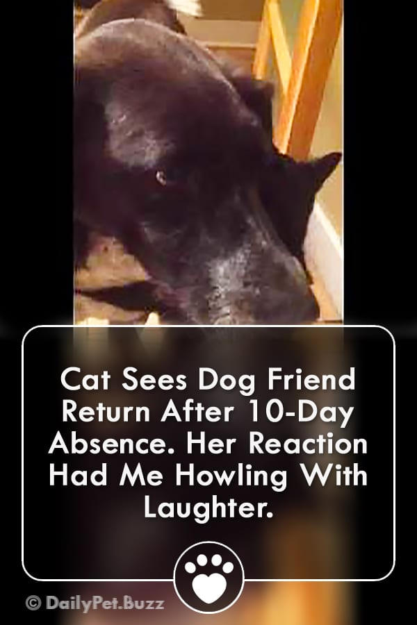 Cat Sees Dog Friend Return After 10-Day Absence. Her Reaction Had Me Howling With Laughter.