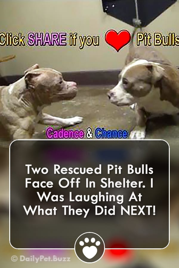 Two Rescued Pit Bulls Face Off In Shelter. I Was Laughing At What They Did NEXT!