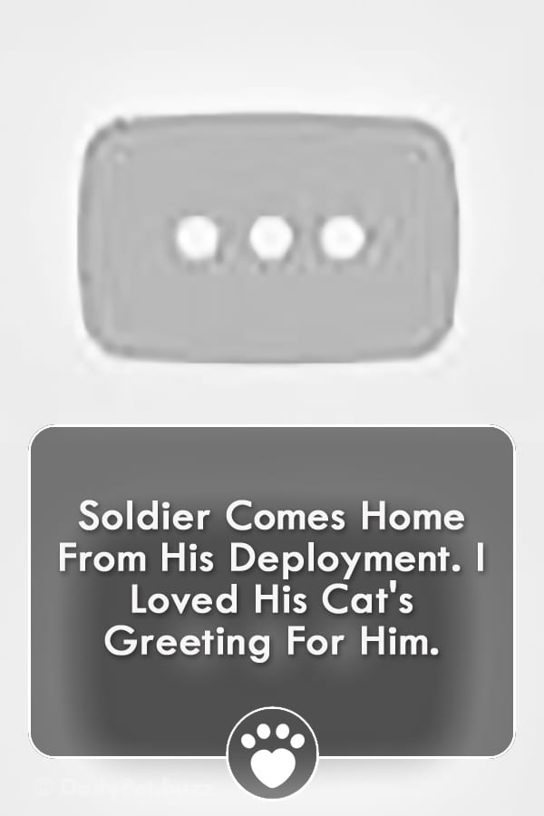 Soldier Comes Home From His Deployment. I Loved His Cat\'s Greeting For Him.