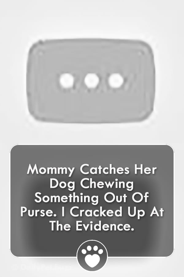 Mommy Catches Her Dog Chewing Something Out Of Purse. I Cracked Up At The Evidence.