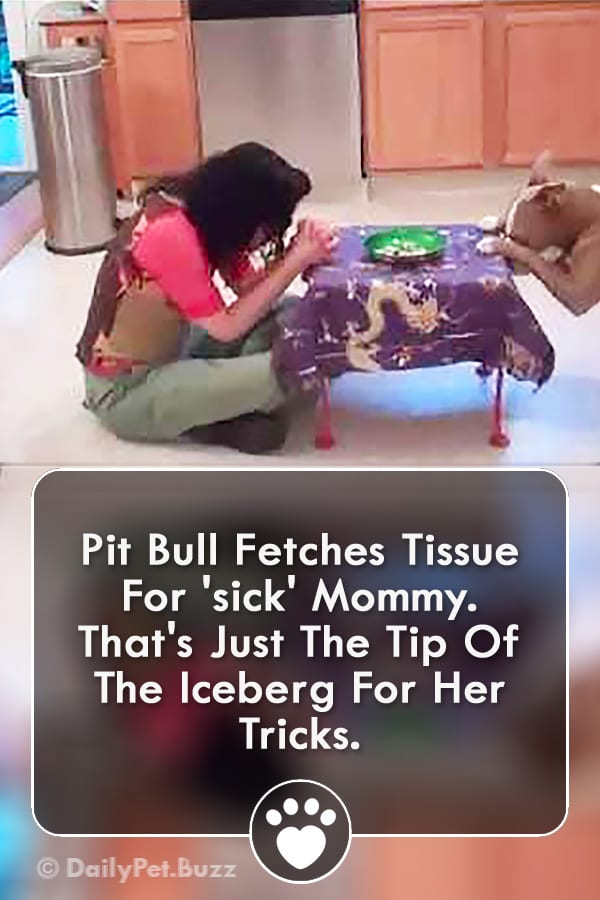 Pit Bull Fetches Tissue For \'sick\' Mommy. That\'s Just The Tip Of The Iceberg For Her Tricks.