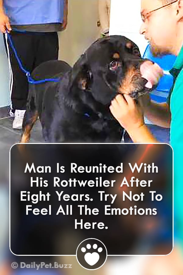 Man Is Reunited With His Rottweiler After Eight Years. Try Not To Feel All The Emotions Here.