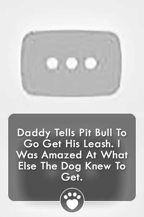 Daddy Tells Pit Bull To Go Get His Leash. I Was Amazed At What Else The Dog Knew To Get.