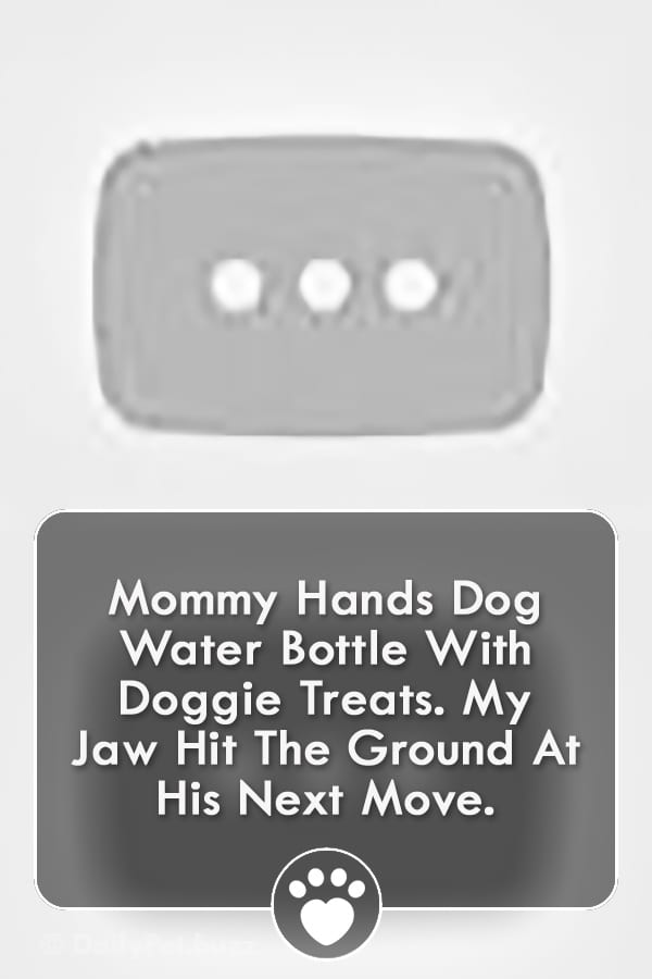Mommy Hands Dog Water Bottle With Doggie Treats. My Jaw Hit The Ground At His Next Move.