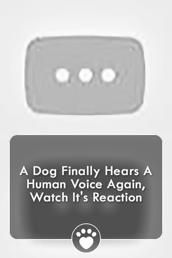 A Dog Finally Hears A Human Voice Again, Watch It\'s Reaction