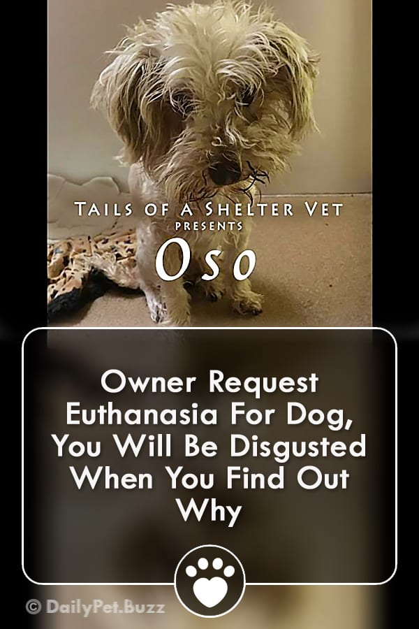 Owner Request Euthanasia For Dog, You Will Be Disgusted When You Find Out Why