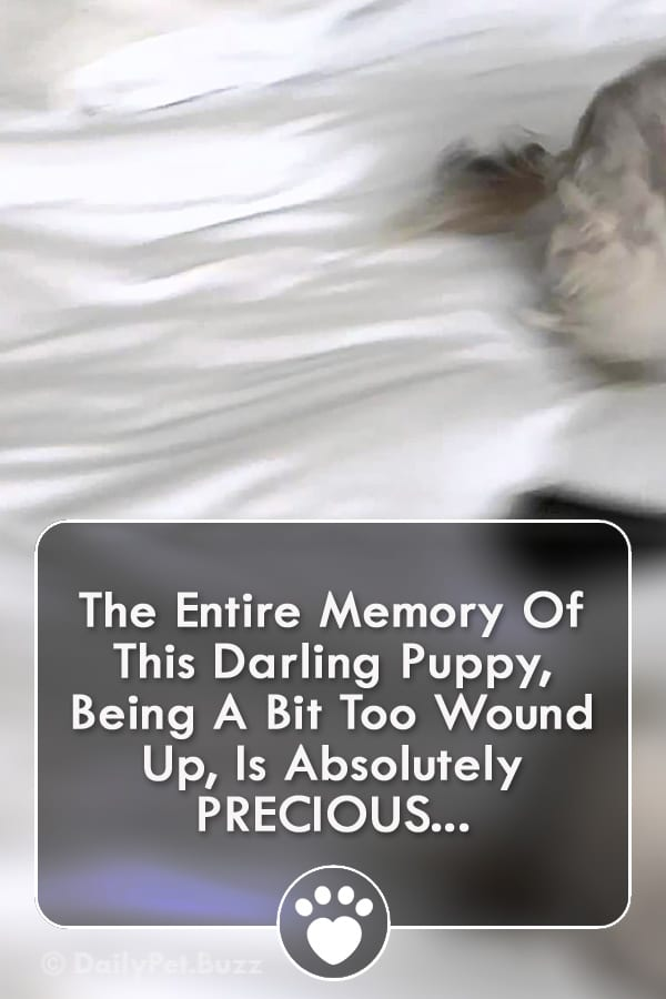 The Entire Memory Of This Darling Puppy, Being A Bit Too Wound Up, Is Absolutely PRECIOUS...