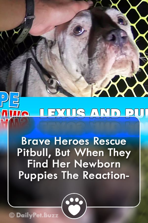 Brave Heroes Rescue Pitbull, But When They Find Her Newborn Puppies The Reaction-