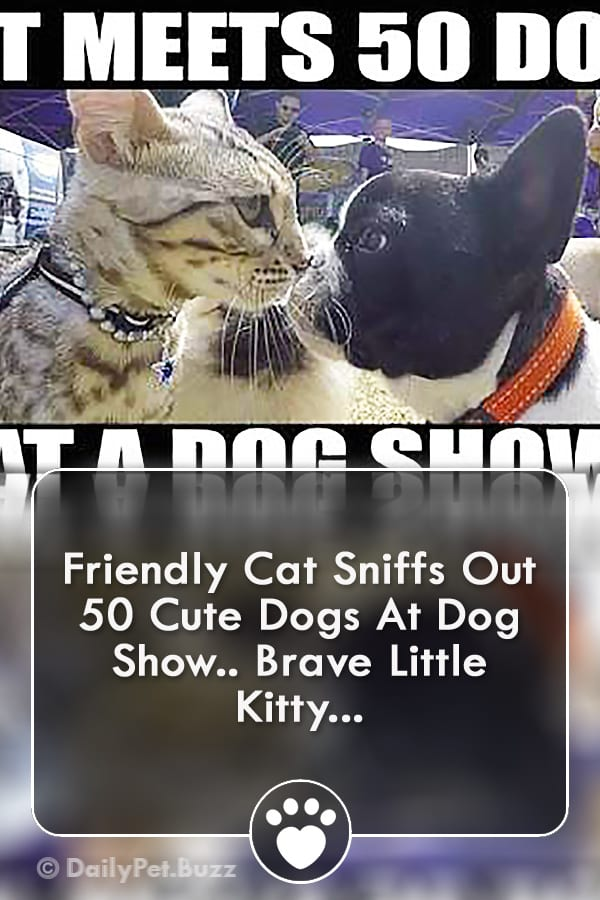 Friendly Cat Sniffs Out 50 Cute Dogs At Dog Show.. Brave Little Kitty...