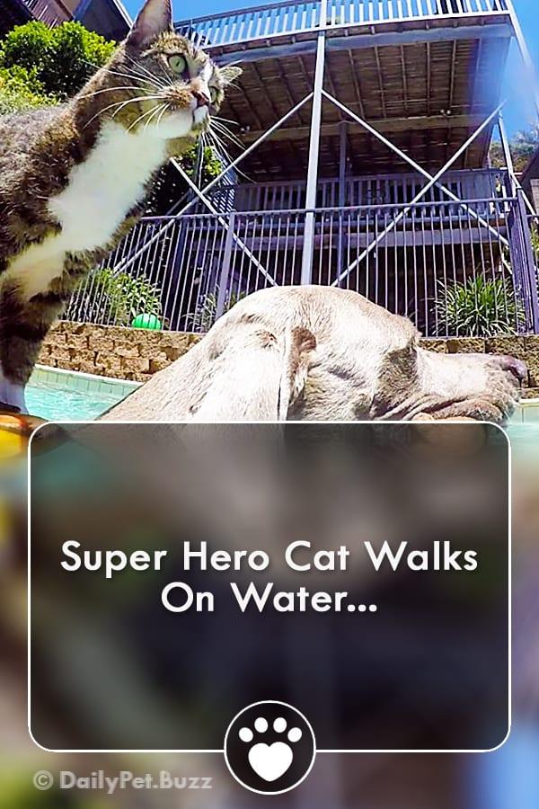 Super Hero Cat Walks On Water...