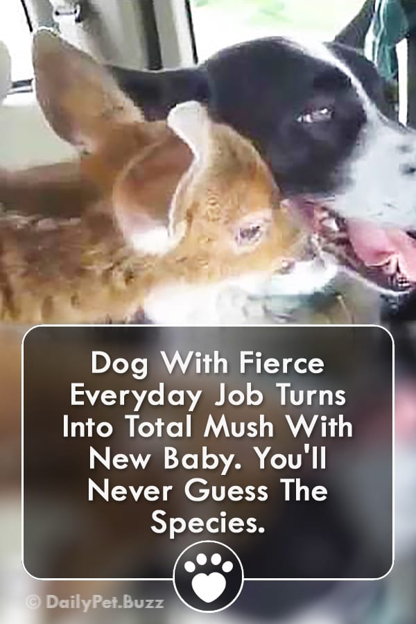 Dog With Fierce Everyday Job Turns Into Total Mush With New Baby. You\'ll Never Guess The Species.
