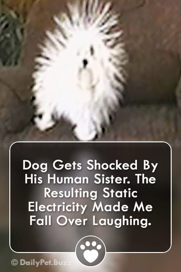 Dog Gets Shocked By His Human Sister. The Resulting Static Electricity Made Me Fall Over Laughing.