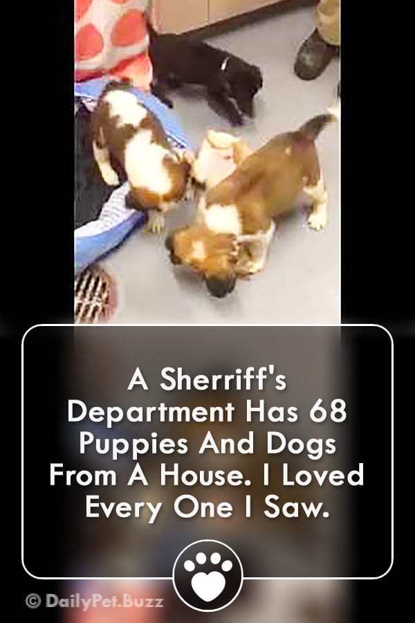 A Sherriff\'s Department Has 68 Puppies And Dogs From A House. I Loved Every One I Saw.
