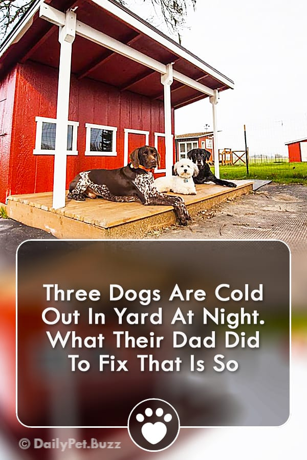 Three Dogs Are Cold Out In Yard At Night. What Their Dad Did To Fix That Is So