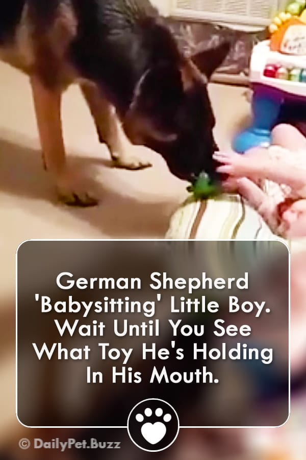 German Shepherd \'Babysitting\' Little Boy. Wait Until You See What Toy He\'s Holding In His Mouth.