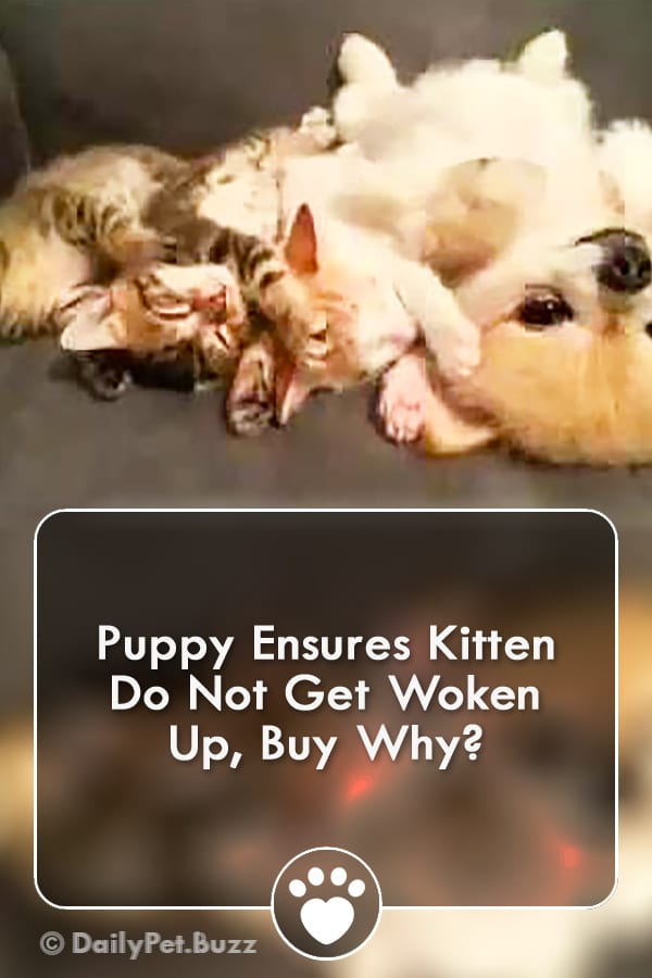 Puppy Ensures Kitten Do Not Get Woken Up, Buy Why?