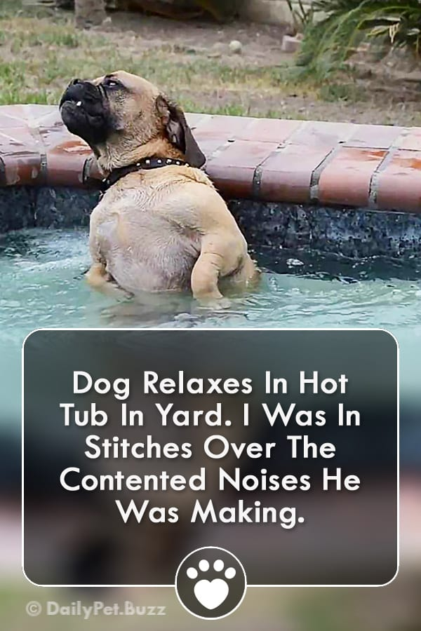 Dog Relaxes In Hot Tub In Yard. I Was In Stitches Over The Contented Noises He Was Making.