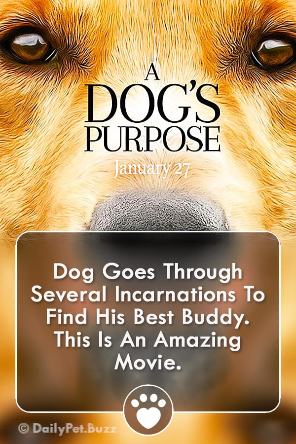 Dog Goes Through Several Incarnations To Find His Best Buddy. This Is An Amazing Movie.