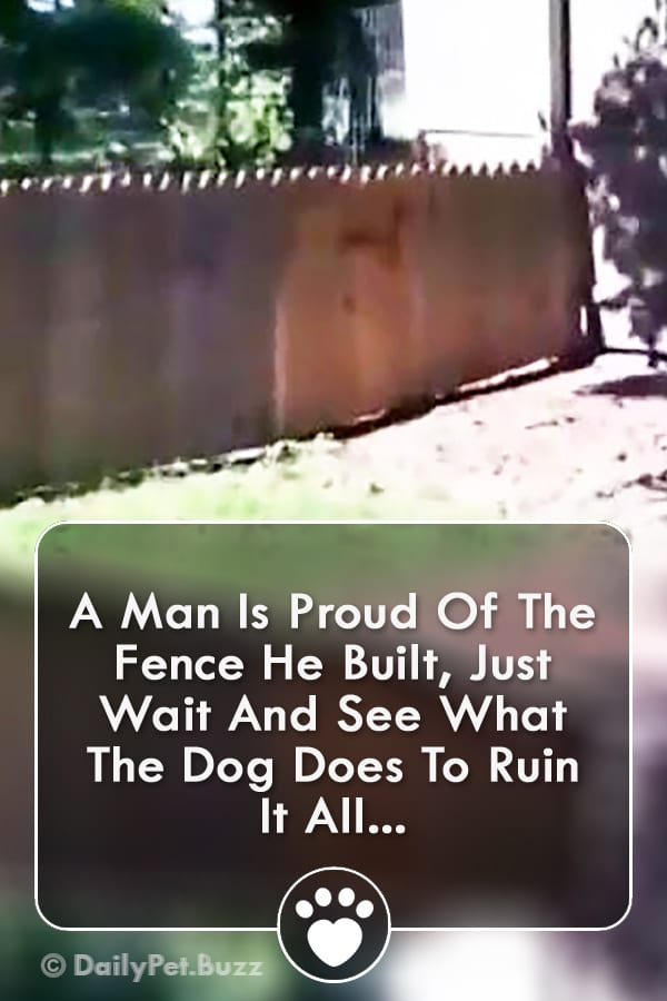 A Man Is Proud Of The Fence He Built, Just Wait And See What The Dog Does To Ruin It All...