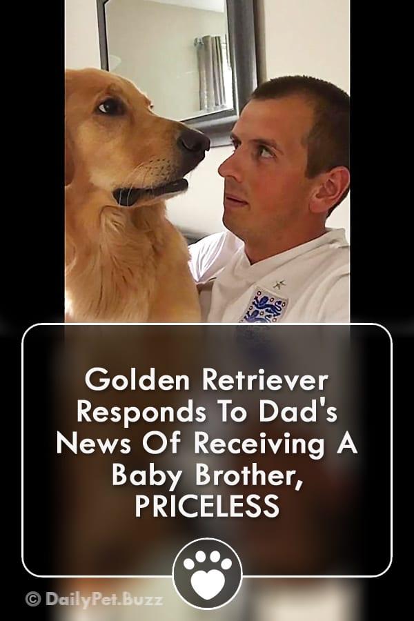 Golden Retriever Responds To Dad\'s News Of Receiving A Baby Brother, PRICELESS