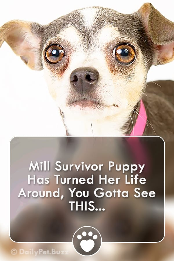 Mill Survivor Puppy Has Turned Her Life Around, You Gotta See THIS...