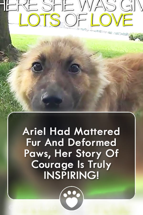 Ariel Had Mattered Fur And Deformed Paws, Her Story Of Courage Is Truly INSPIRING!