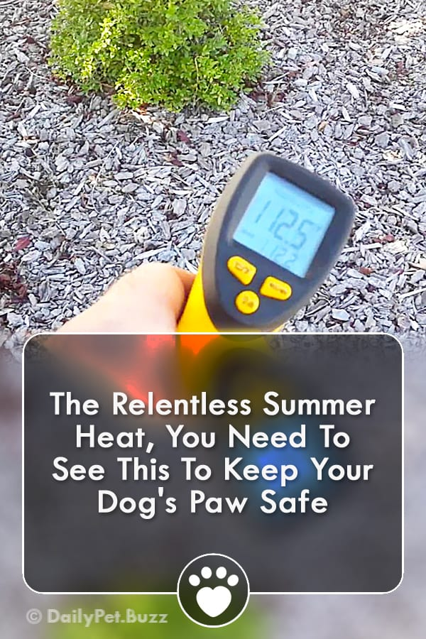 The Relentless Summer Heat, You Need To See This To Keep Your Dog\'s Paw Safe