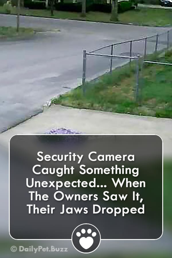 Security Camera Caught Something Unexpected... When The Owners Saw It, Their Jaws Dropped