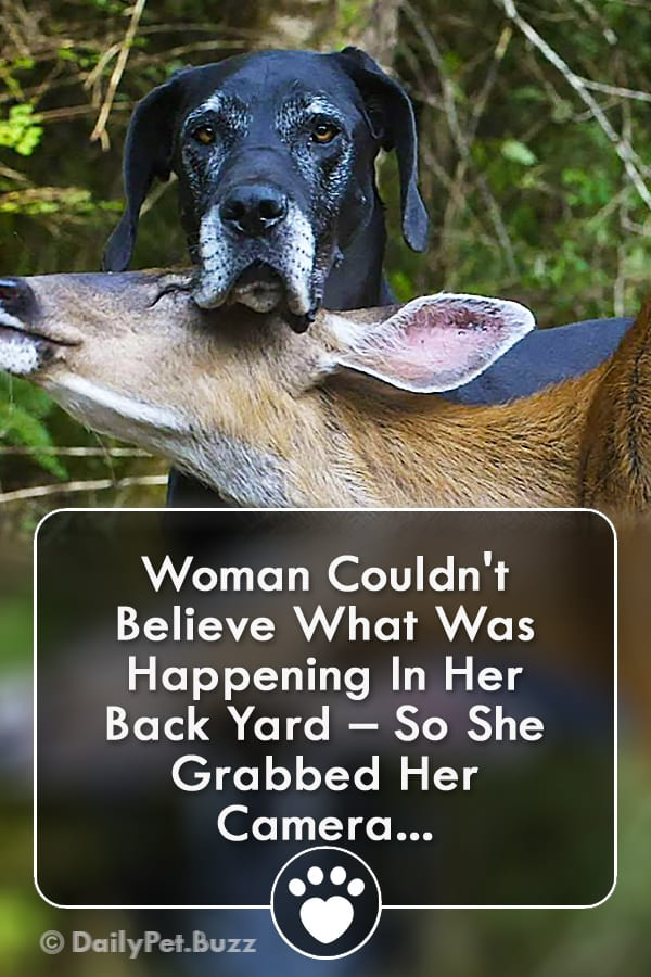 Woman Couldn\'t Believe What Was Happening In Her Back Yard – So She Grabbed Her Camera...