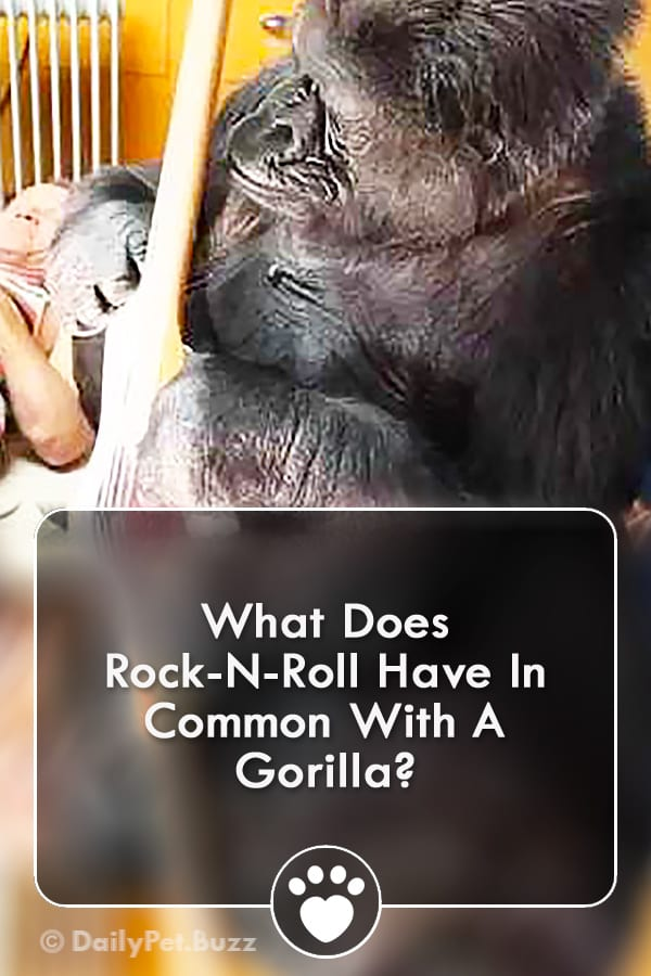 What Does Rock-N-Roll Have In Common With A Gorilla?