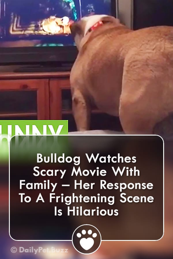Bulldog Watches Scary Movie With Family – Her Response To A Frightening Scene Is Hilarious
