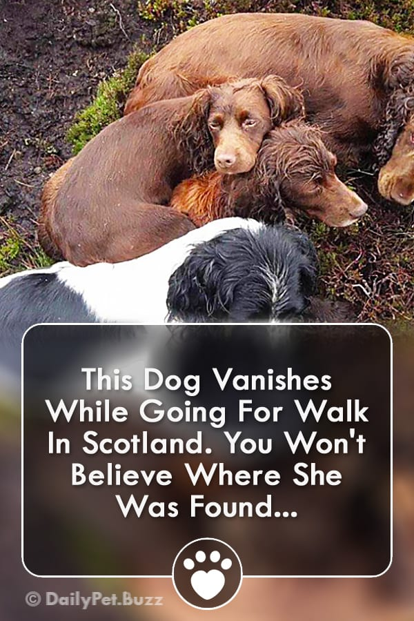 This Dog Vanishes While Going For Walk In Scotland. You Won\'t Believe Where She Was Found...