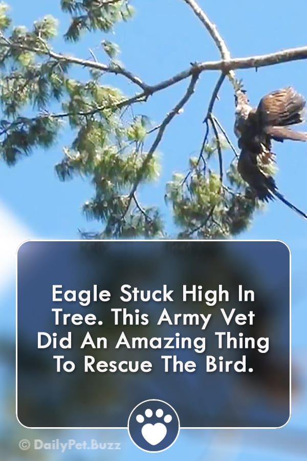Eagle Stuck High In Tree. This Army Vet Did An Amazing Thing To Rescue The Bird.