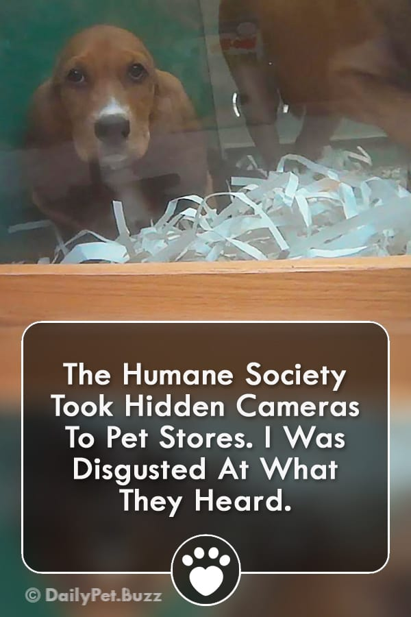 The Humane Society Took Hidden Cameras To Pet Stores. I Was Disgusted At What They Heard.