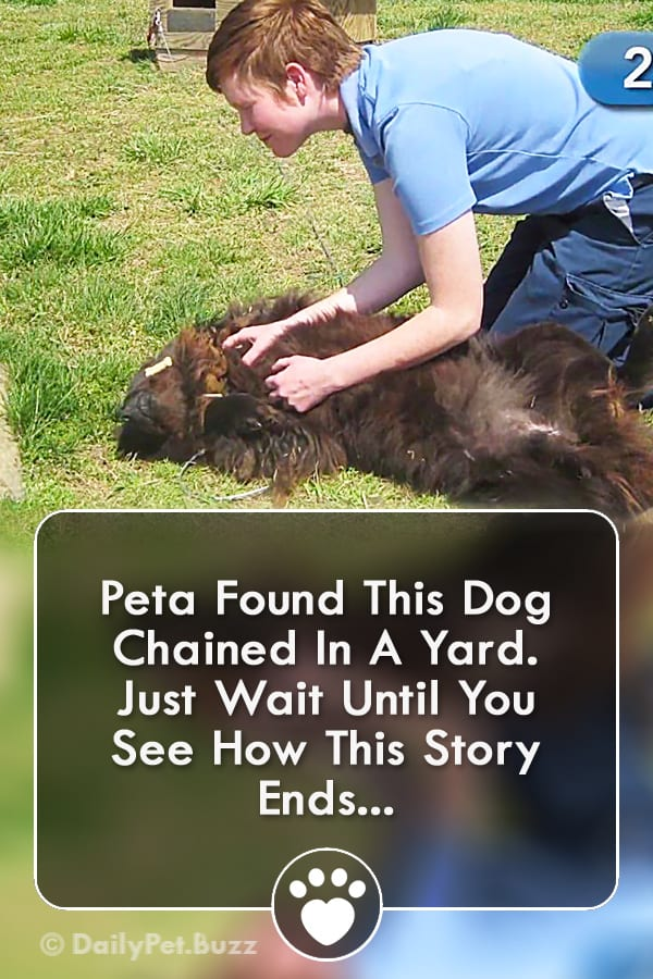 Peta Found This Dog Chained In A Yard. Just Wait Until You See How This Story Ends...