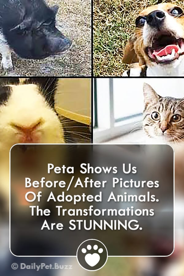 Peta Shows Us Before/After Pictures Of Adopted Animals. The Transformations Are STUNNING.