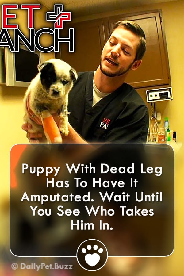 Puppy With Dead Leg Has To Have It Amputated. Wait Until You See Who Takes Him In.