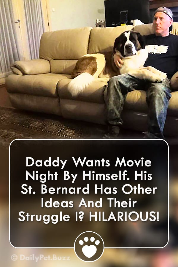 Daddy Wants Movie Night By Himself. His St. Bernard Has Other Ideas And Their Struggle I? HILARIOUS!