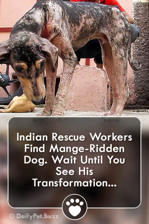 Indian Rescue Workers Find Mange-Ridden Dog. Wait Until You See His Transformation...