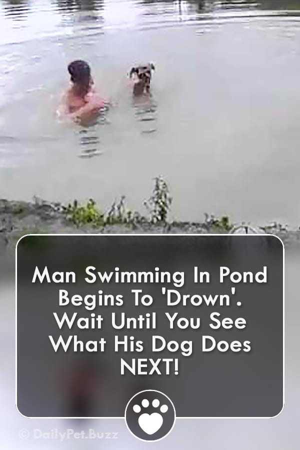 Man Swimming In Pond Begins To \'Drown\'. Wait Until You See What His Dog Does NEXT!