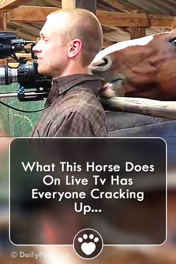What This Horse Does On Live Tv Has Everyone Cracking Up...