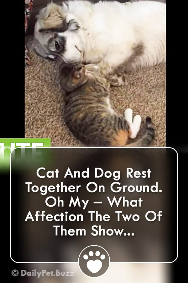 Cat And Dog Rest Together On Ground. Oh My – What Affection The Two Of Them Show...