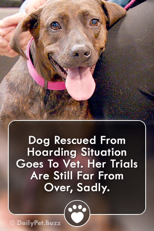 Dog Rescued From Hoarding Situation Goes To Vet. Her Trials Are Still Far From Over, Sadly.