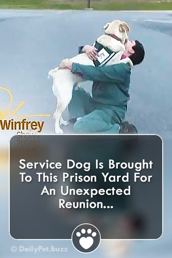 Service Dog Is Brought To This Prison Yard For An Unexpected Reunion...